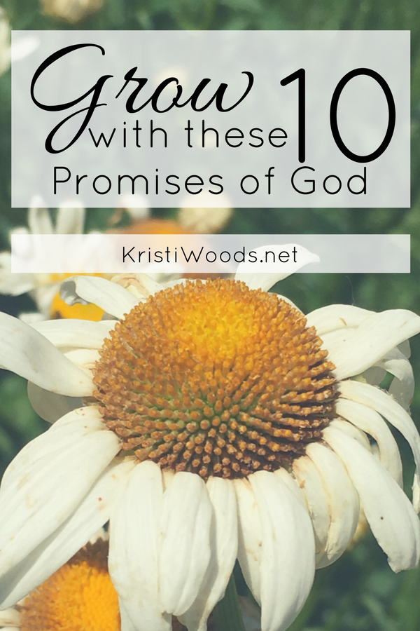 White daisy in the background with Christian blog post title over top. Grow with these 10 Promises of God by KristiWoods.net
